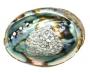 Abalone schelp 14-15 cm