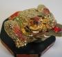 Feng shui kikker - goudkleur