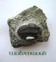 Trilobiet (USA) 4,5 cm